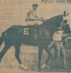 Walking Angel Fish onto Aqueduct Racetrack on Sept.4 .1962 for my first race. I was wearing the Eaton Blue and Brown silks of the C.V. Whitney Stable.